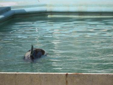3月28日(日) ハニー追悼アクション@神戸須磨海浜水族館前